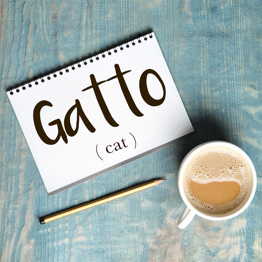 italian-word-for-cat-gatto