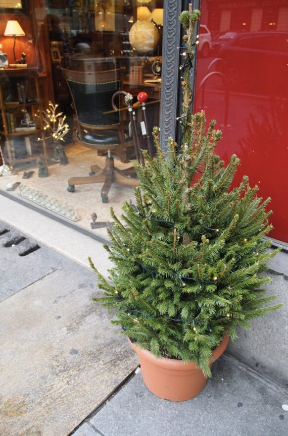 Christmas tree outside in a pot