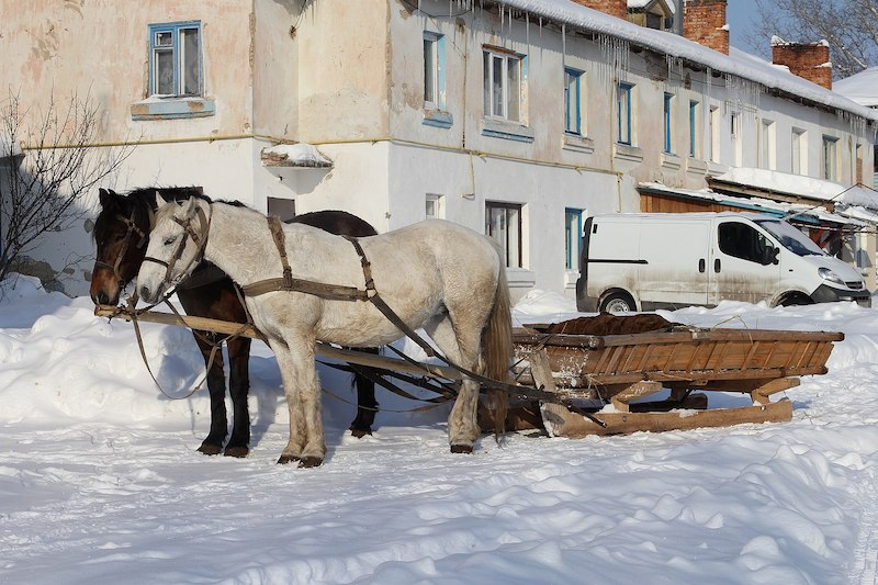 two horses pulling a sleigh in the snow