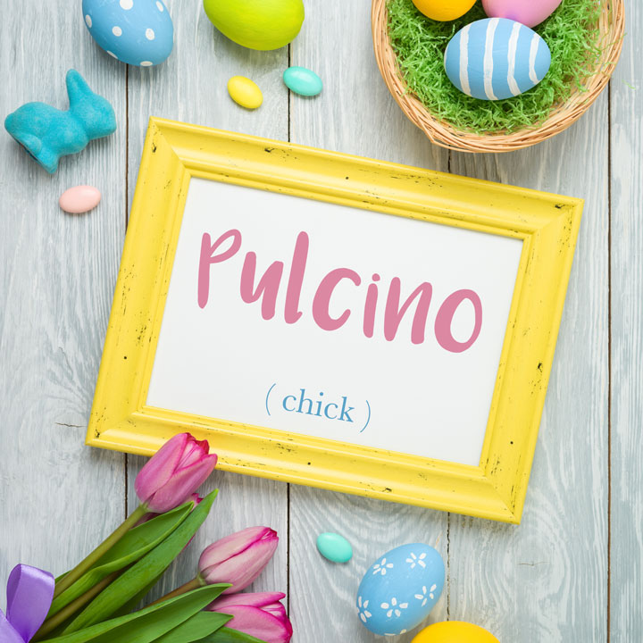 Italian Word of the Day: Pulcino (chick)