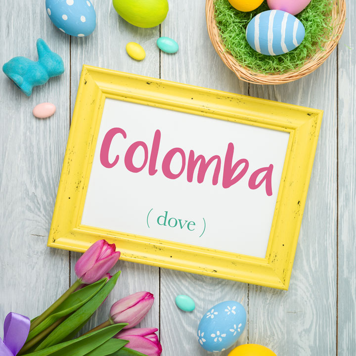 Italian Word of the Day: Colomba (dove)