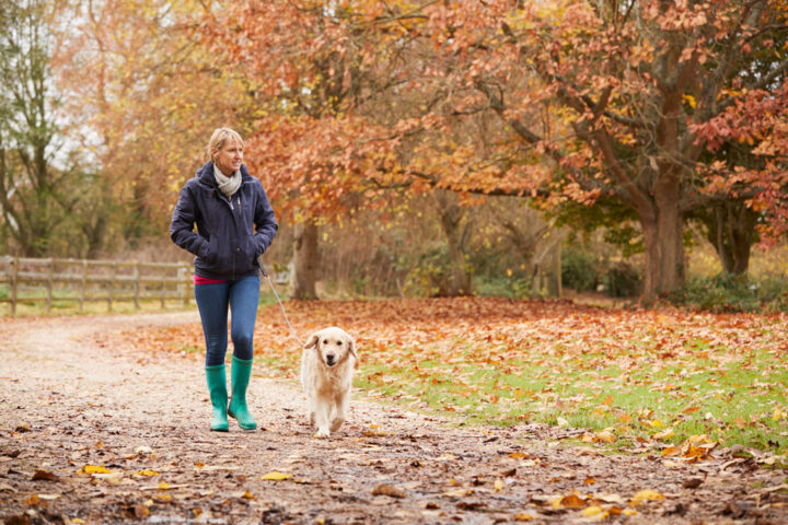 middle age woman walking her dog in a park in autumn