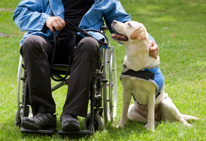 a dog sitting next a person on a wheelchair