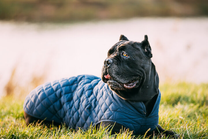 relaxed dog on the grass