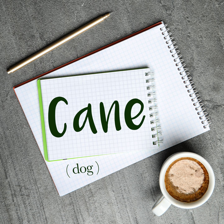 Italian Word of the Day: Cane (dog)
