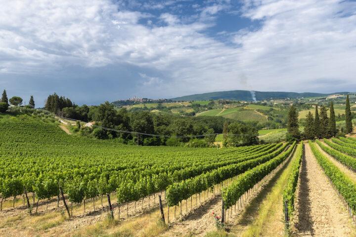 summer landscape of vineyards in tuscany