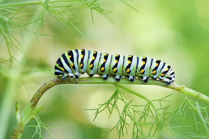 caterpillar on a small brench