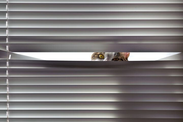 cat looking over a blind