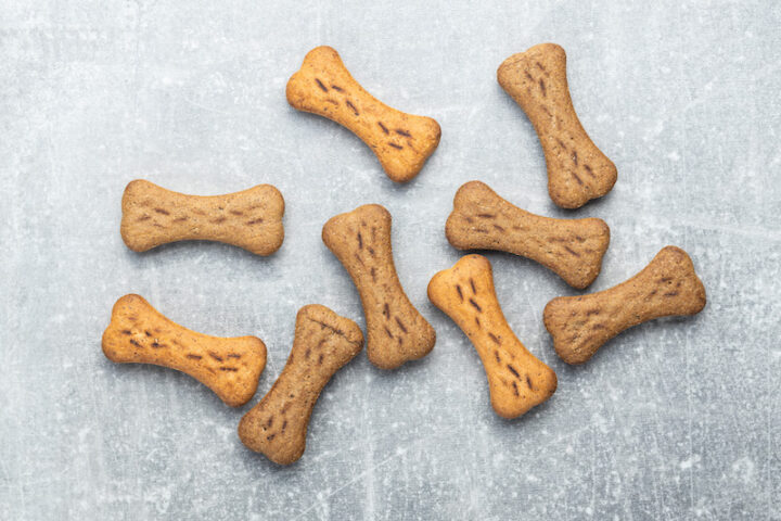 bone-shaped biscuits lying on a grey surface
