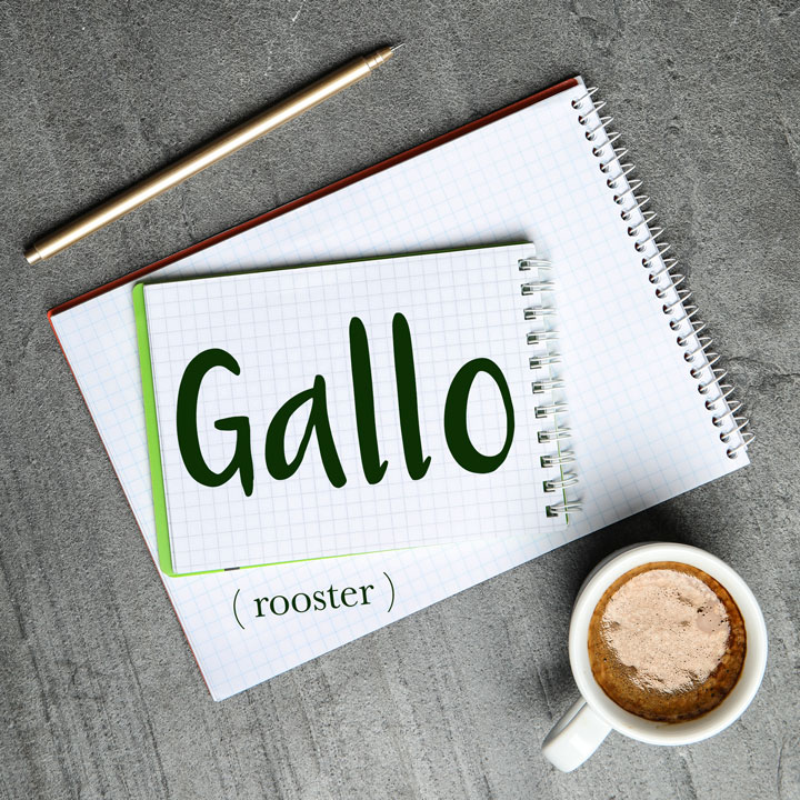 Italian Word of the Day: Gallo (rooster)