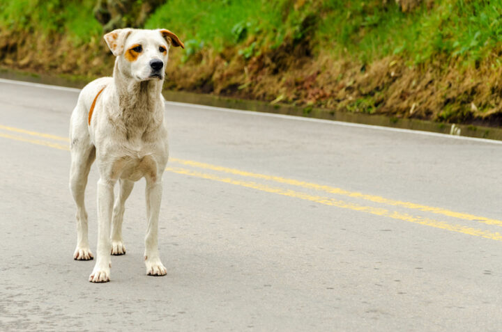 skinny dog on the road