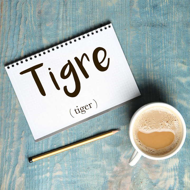 Italian Word of the Day: Tigre (tiger)