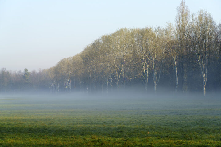 Milan, Lombardy, Italy: winter in the park know as Parco Nord at morning