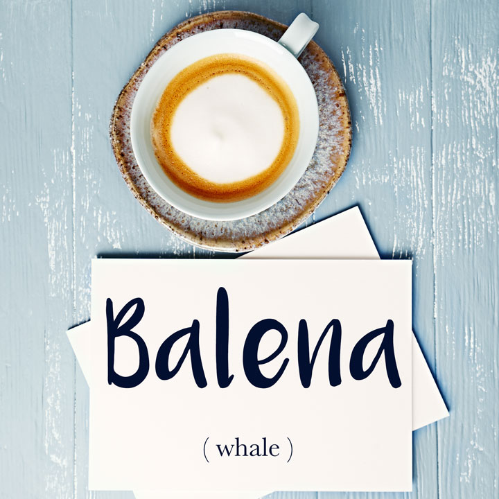 Italian Word of the Day: Balena (whale)