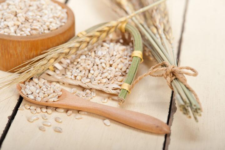 organic wheat grains  over rustic wood table macro closeup