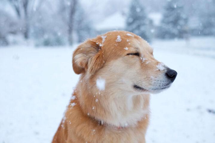 Dog with big snowflakes