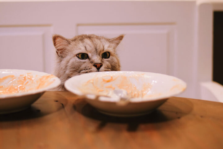 Curious cat is looking at empty plates on a table