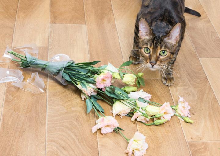 Cat and broken glass vase of flowers