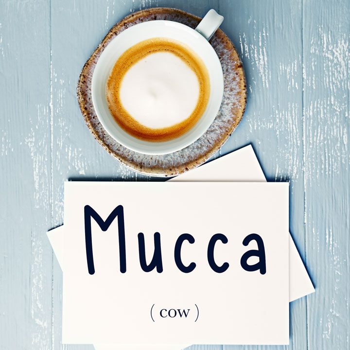 Italian Word of the Day: Mucca (cow)