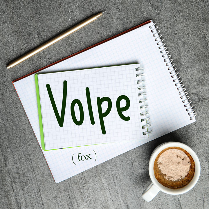 Italian Word of the Day: Volpe (fox)