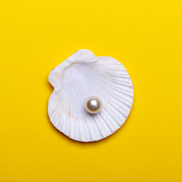 Shea shell with the perl on yellow background
