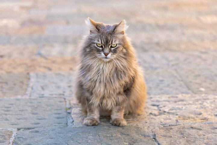 Single cat sitting on the pavement