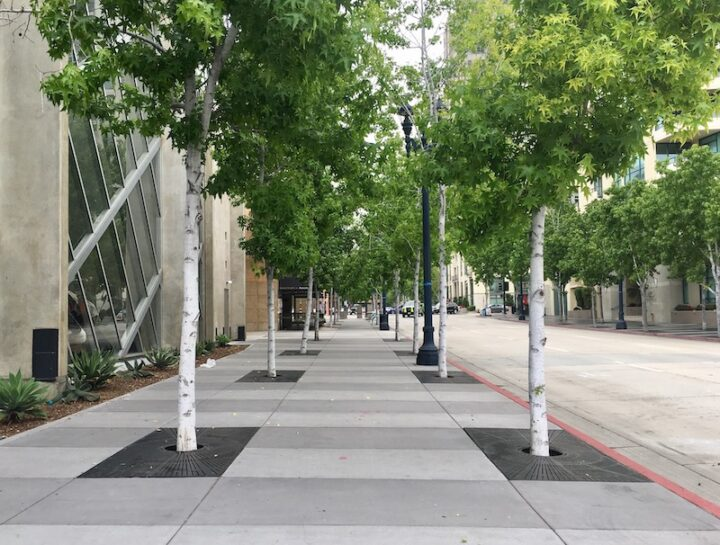 An empty street lined with trees