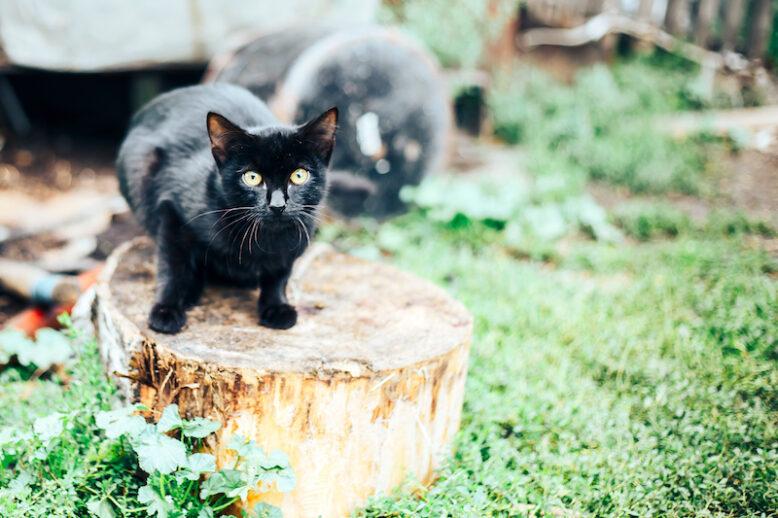 black cat sitting on a tree stump