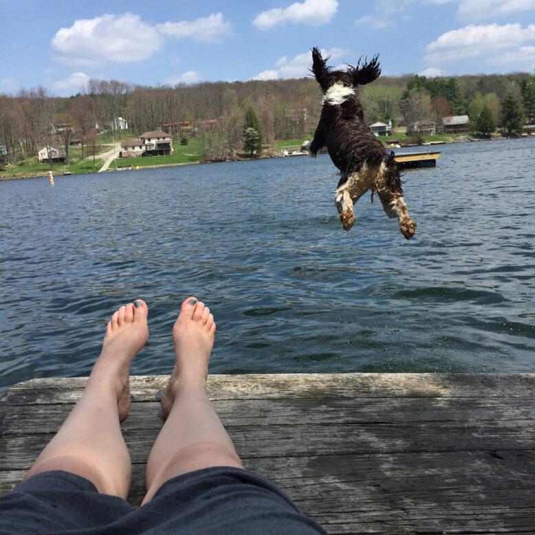 dog jumping into a lake